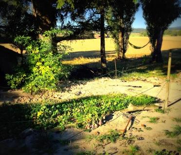 Valorisation de l'ancien paddock (radis-carotte-ognons)